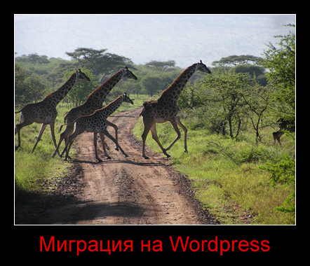 Миграция на WordPress